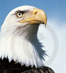 Eaglewatch logo